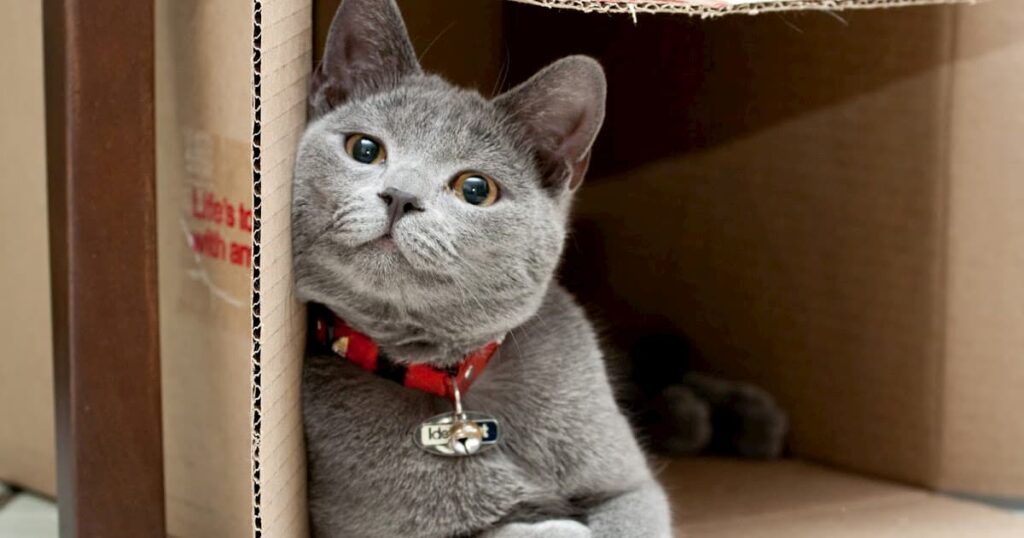 Things you need to know about cats and moving with them